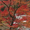 京都・西山 善峯寺10