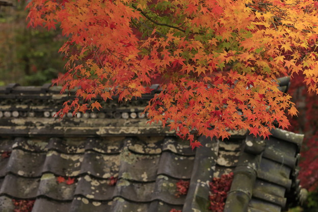 Photos: 京都・西山 善峯寺09