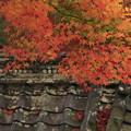 京都・西山 善峯寺09