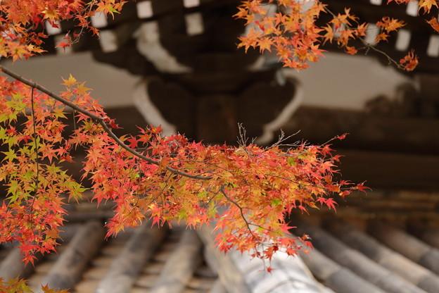 京都・西山 善峯寺08
