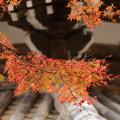 Photos: 京都・西山 善峯寺08