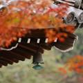 Photos: 京都・西山 善峯寺07
