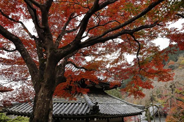 京都・西山 善峯寺06