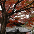 Photos: 京都・西山 善峯寺06