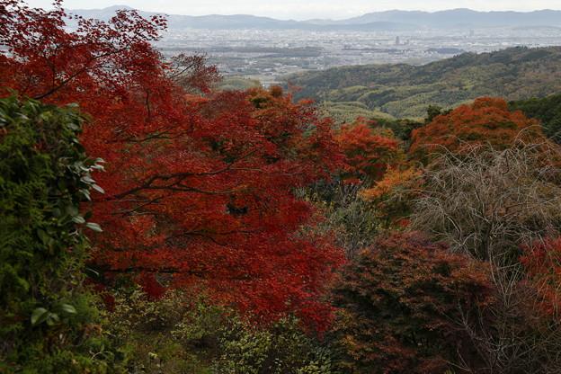 京都・西山 善峯寺03
