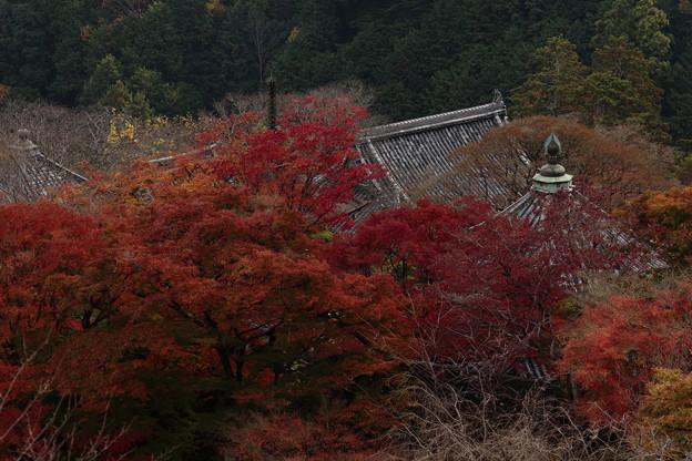 京都・西山 善峯寺14