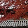 京都・西山 善峯寺04