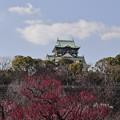 Photos: 大阪城公園梅林09