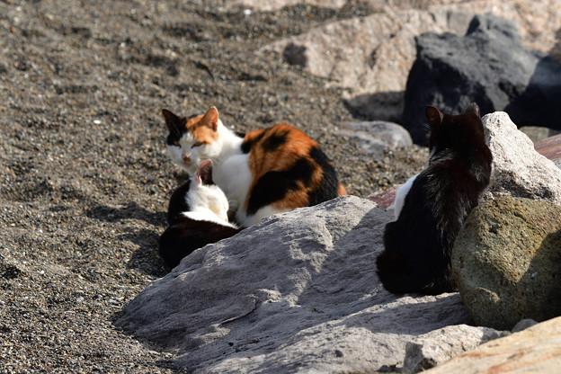 写真: 猫三昧_1998