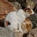 写真: 猫三昧_2000