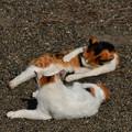 写真: 猫三昧_2005