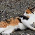 写真: 猫三昧_2006