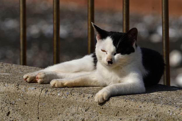 猫三昧_2010