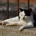 写真: 猫三昧_2010