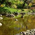 写真: 小石川後楽園_128