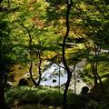 写真: 小石川後楽園_132
