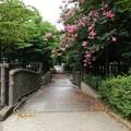 写真: 市川緑道
