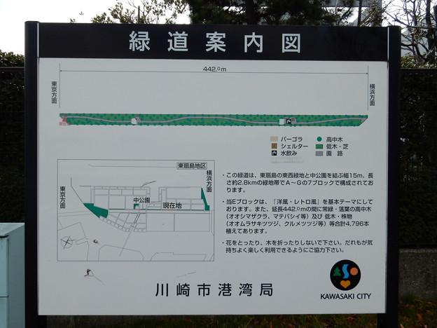 緑道案内図