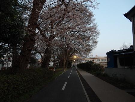 桜ポタのついでに菅生尾根の機動隊巡り