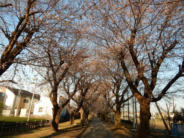 野山北公園自転車道