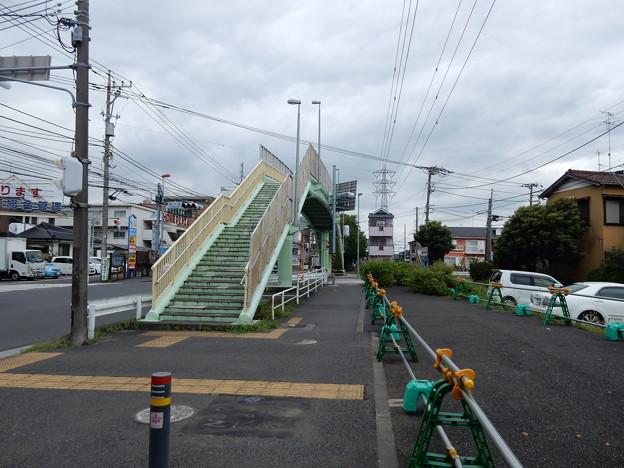 写真: 桜並木歩道橋