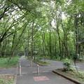 写真: 木もれびの森