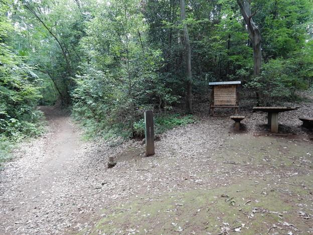 トトロの森2号地