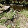 写真: 姥川