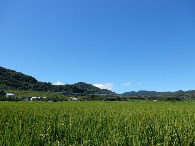 中州の田園