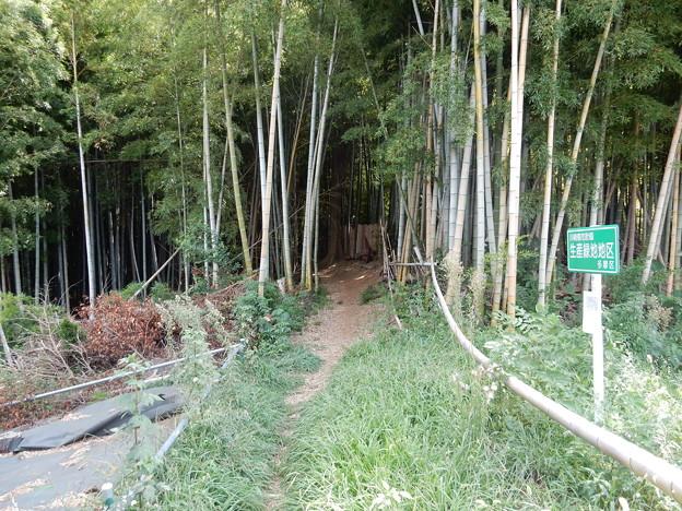 東生田自然遊歩道