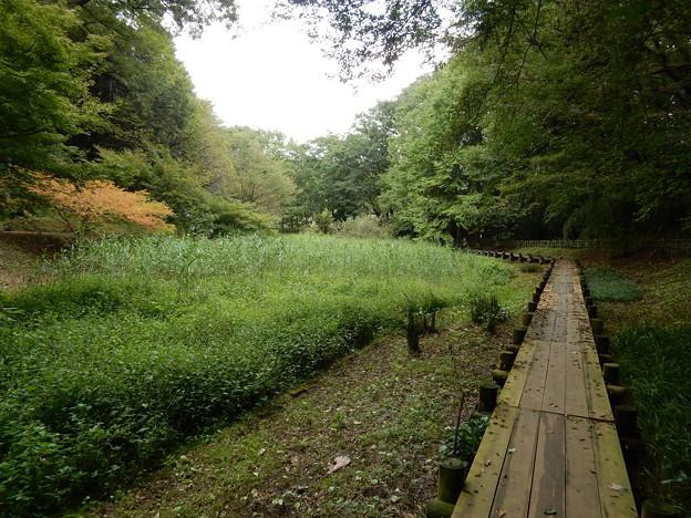 小山田の谷