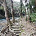 写真: 吾妻峡散歩道