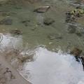 写真: 砂岸