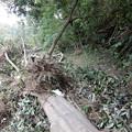 写真: 倒木を越えて