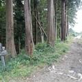三保市民の森へ