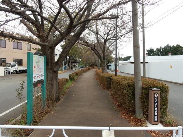ふるさと尾根道緑道
