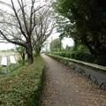 写真: 緑道