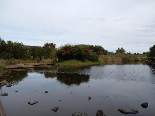 金山調整池