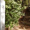Photos: 浅間坂