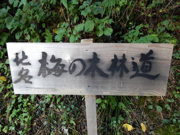 梅の木林道