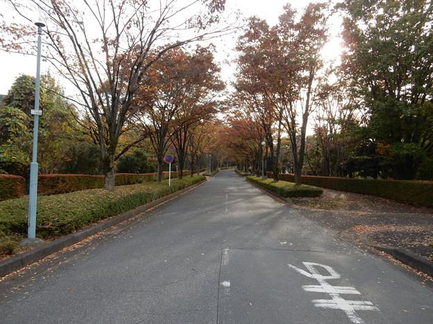 所沢キャンパス前