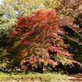 Photos: 桜ヶ丘公園