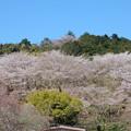 桜の山公園