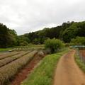 Photos: 岩渕