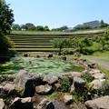 Photos: 若葉台公園
