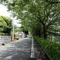 Photos: 東急沿い