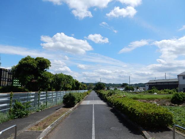 下河原緑道