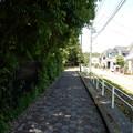 Photos: 金井三丁目緑地