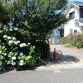Photos: 野津田山王あじさい公園