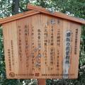 Photos: 勝坂の照葉樹林